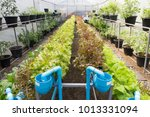organic hydroponic vegetable... | Shutterstock . vector #1013331094