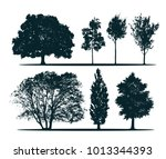 Tree silhouettes - green oak, maple, acer-platanoides, linden, ash, poplar. Set of different trees.