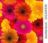 Gerbera Seamless Pattern Flora...