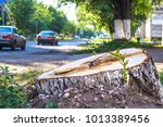 a fresh cut down stump in the... | Shutterstock . vector #1013389456