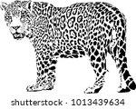 black and white vector sketch...   Shutterstock .eps vector #1013439634