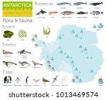 antarctic  antarctica   flora... | Shutterstock .eps vector #1013469574