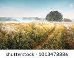 summer landscape of morning...   Shutterstock . vector #1013478886