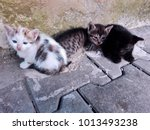 three homeless kittens on... | Shutterstock . vector #1013493238