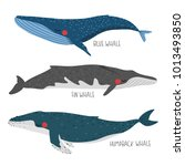 set of three illustration of... | Shutterstock .eps vector #1013493850