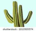 cactus. green vector cactus.... | Shutterstock .eps vector #1013505574