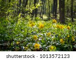 Yellow Flowers During...