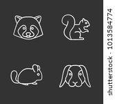 pets chalk icons set. raccoon ... | Shutterstock .eps vector #1013584774