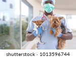 Stock photo veterinarian and cute pets luxery pet hospital background 1013596744