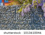 wisteria blossom on gabion... | Shutterstock . vector #1013610046