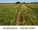 Field Of Wheat Australia  Some...