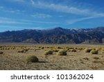 Green Spots On High Desert Wit...