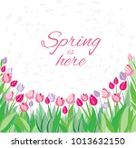 tulips on a white background... | Shutterstock .eps vector #1013632150