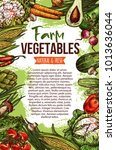 vegetables and natural farm... | Shutterstock .eps vector #1013636044