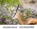 beautiful close up view of a...   Shutterstock . vector #1013663080