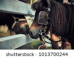 two horses a couple touching... | Shutterstock . vector #1013700244