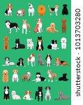 various medium size dog breeds... | Shutterstock .eps vector #1013703280