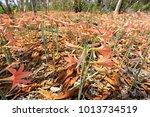 Amaryllidaceae Plants In...
