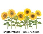 sunflower field with watercolor ... | Shutterstock . vector #1013735806