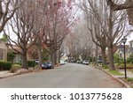 Small photo of Tall Liquid amber, commonly called sweet gum tree, or American Sweet gum tree, lining an older neighborhood in Northern California. Branches mostly bare, winter dormant.