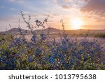 majestic sunset with blackthorn ... | Shutterstock . vector #1013795638