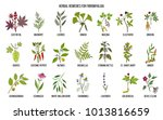 best medicinal herbs for... | Shutterstock .eps vector #1013816659