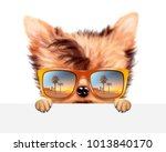 funny dog wearing sunglasses... | Shutterstock . vector #1013840170