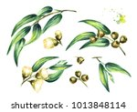 set of eucalyptus cosmetics and ... | Shutterstock . vector #1013848114