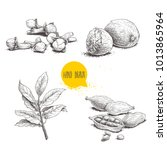 hand drawn sketch spices set....   Shutterstock .eps vector #1013865964