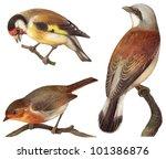 Bird Collection   Goldfinch ...