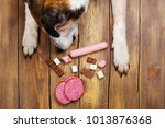 dogs paws and neb and heap of... | Shutterstock . vector #1013876368