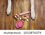 dogs paws and neb and heap of... | Shutterstock . vector #1013876374