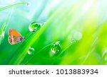 beautiful large drops fresh... | Shutterstock . vector #1013883934