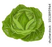 fresh green cabbage vegetable... | Shutterstock .eps vector #1013895964