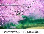 pink flower background    Shutterstock . vector #1013898088