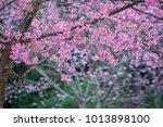 pink flower background    Shutterstock . vector #1013898100