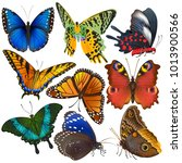 Butterfly Vector Colorful...