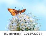 orange butterfly spread its... | Shutterstock . vector #1013933734