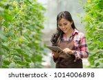 modern farming in hydrophonic... | Shutterstock . vector #1014006898