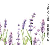wildflower lavender flower... | Shutterstock . vector #1014007870