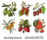 set berries. raspberry ...   Shutterstock .eps vector #1014010570