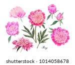 watercolor hand painted pink... | Shutterstock . vector #1014058678