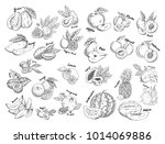 isolated sketches of fruits.... | Shutterstock .eps vector #1014069886