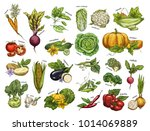 set of isolated vegetables from ... | Shutterstock .eps vector #1014069889