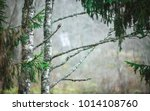 part of the birch   trunk and... | Shutterstock . vector #1014108760