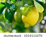 macro image of a  fresh organic ... | Shutterstock . vector #1014111070