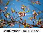 natural background. details of... | Shutterstock . vector #1014130054