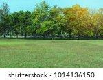 green beautiful park  | Shutterstock . vector #1014136150
