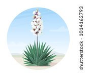 Vector Blooming Yucca Tree On...