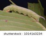 macro image of a sphinx moth... | Shutterstock . vector #1014163234